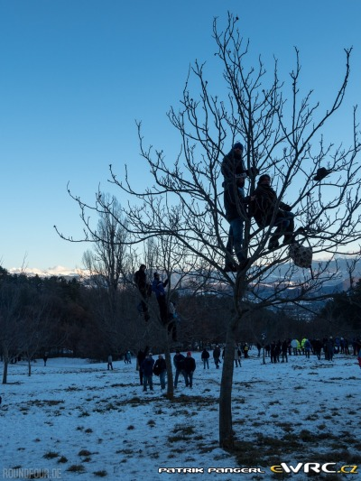 pgr_wrc-rally-monte-carlo-2016-012-atmosphere-people on trees