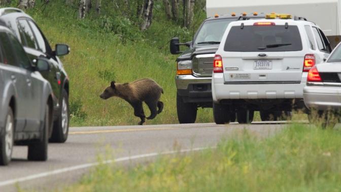 Zero Roadkills – 0 animale lovite de masini